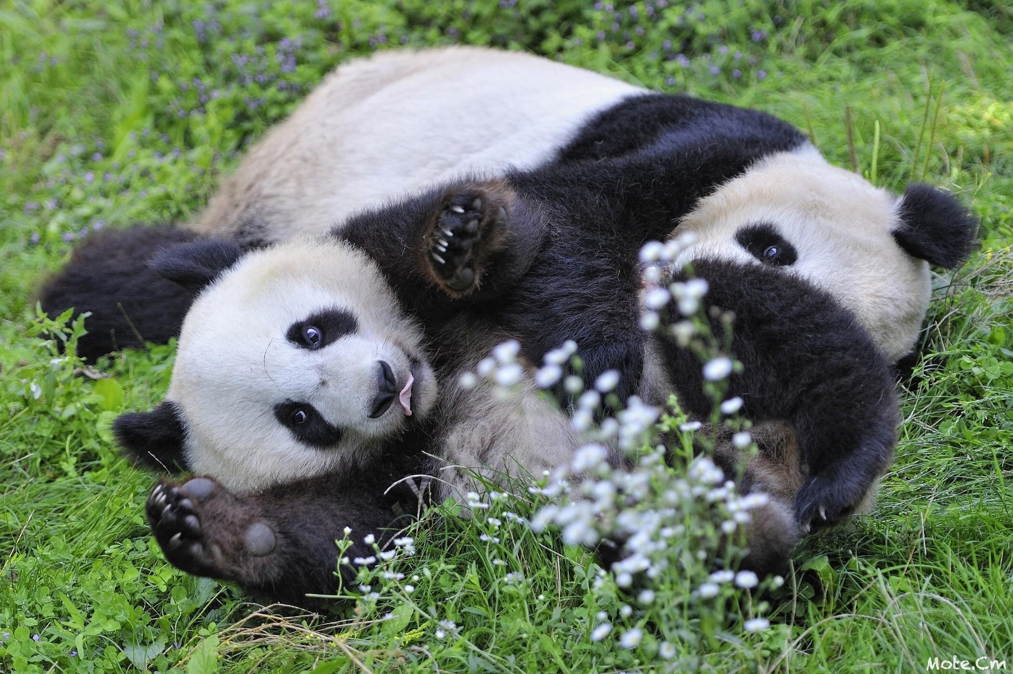 доказала фото с пандами милые самостоятельную диагностику авто