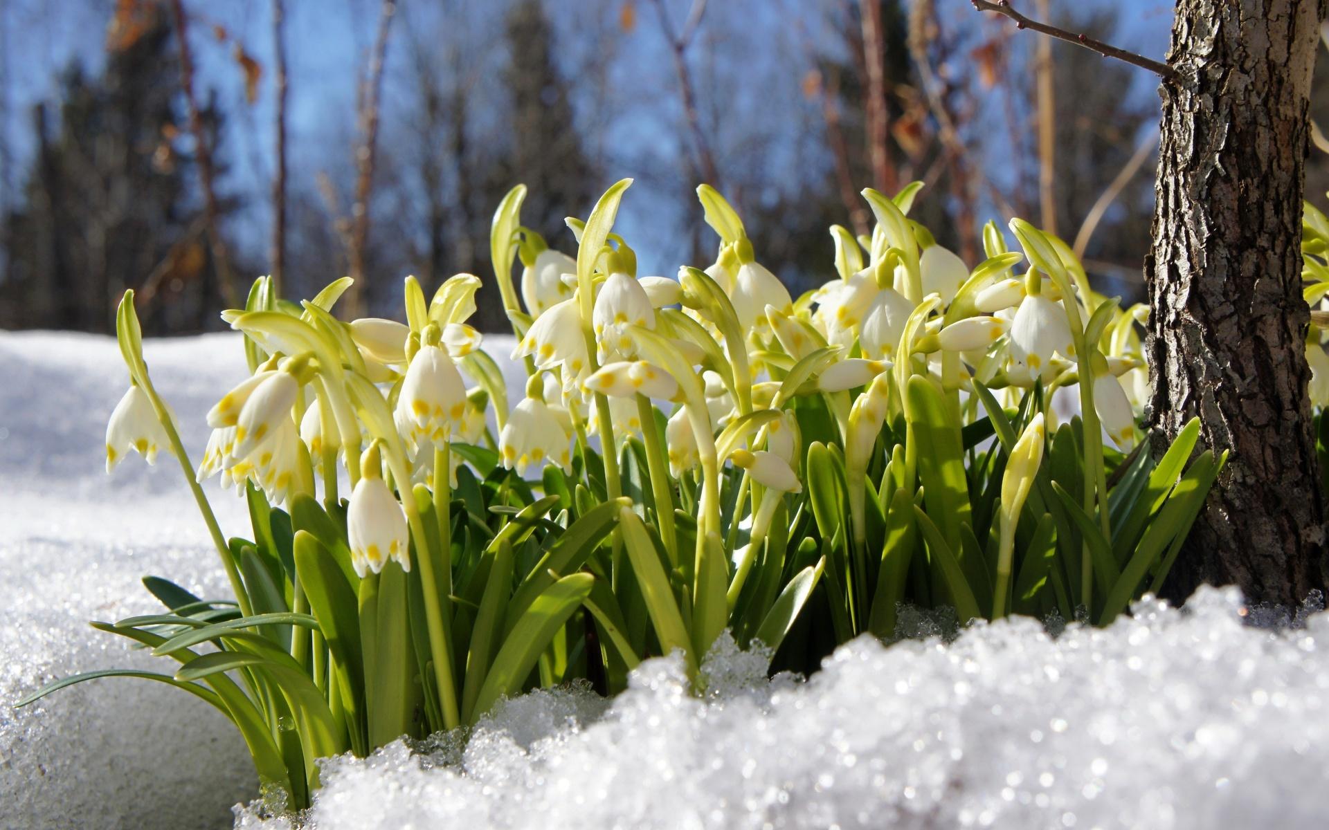 весна фото интересные теперь ограничена