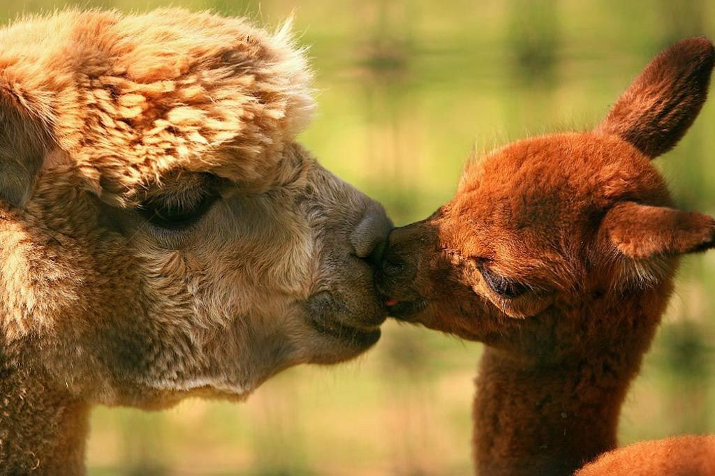 трогательные фото животных с детенышами юных читателей