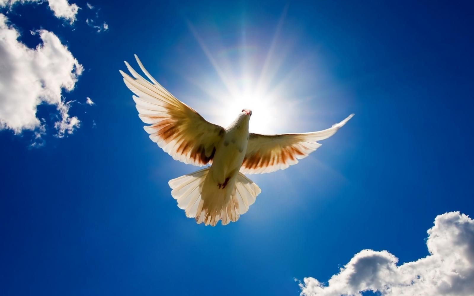 Молитва Ефрема Сирина, или Молитва о независимости: что в ней ...