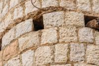 Каменные зайцы, которые совсем не зайцы – доманы или шофаны, родственники не сусликов, но слонов